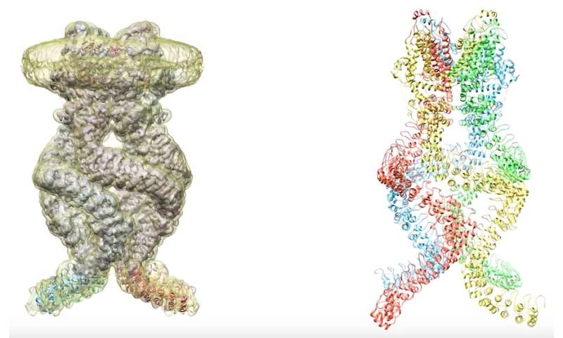 Molecular springs produce a fly's sense of touch and hearing