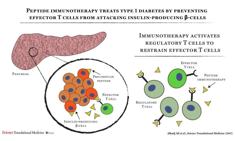 Pioneering immunotherapy shows promise in type 1 diabetes