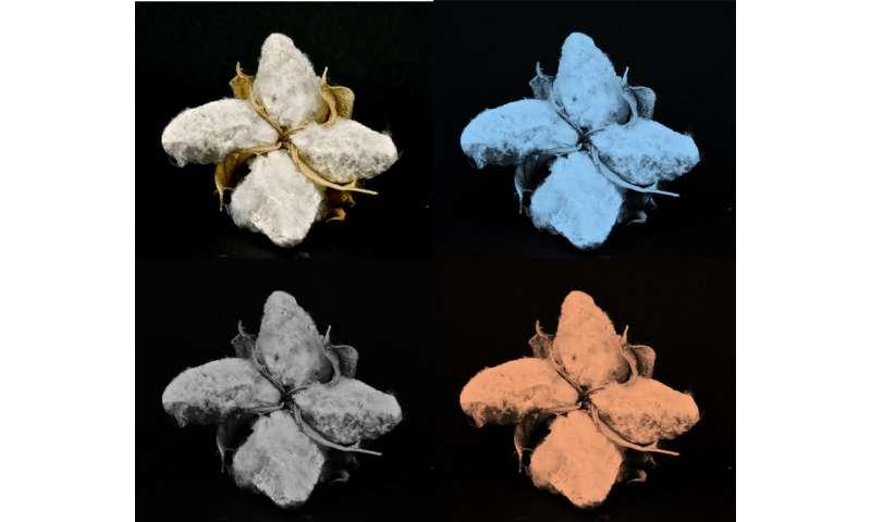 Using sugar molecules to make cotton material glow