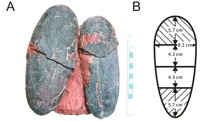 Non-avian dinosaur found to have laid blue eggs