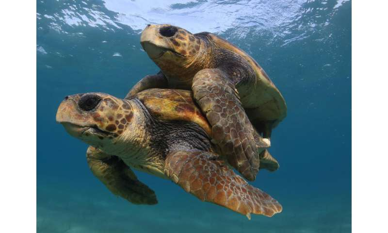 Efforts to save sea turtles are a 'global conservation success story': scientists