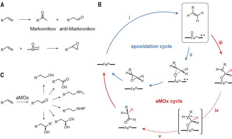 Modified enzyme used to provide better anti-Markovnikov selectivity in alkene oxidations