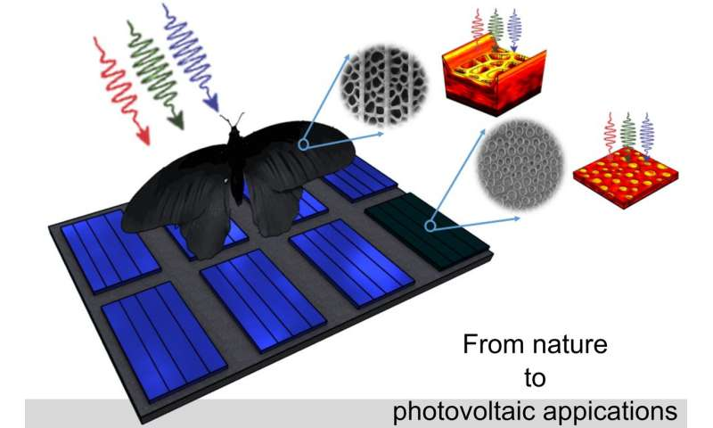 Black butterfly wings offer a model for better solar cells