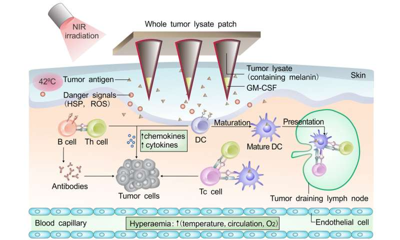 Cancer immunotherapy uses melanin against melanoma