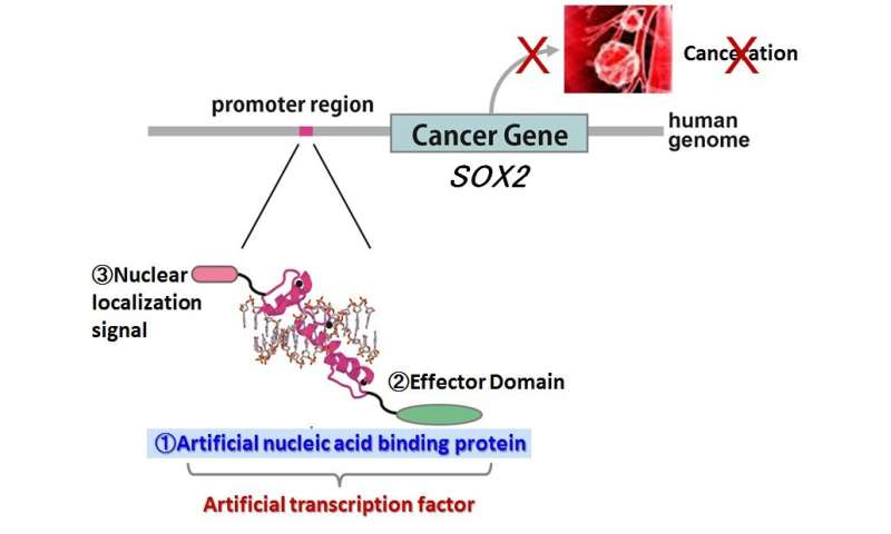 New method for suppressing lung cancer oncogene