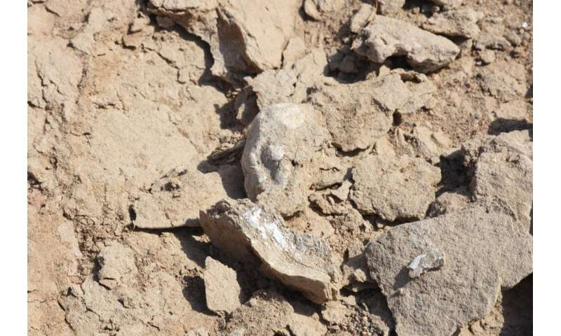 Hundreds of pterosaur eggs reveal early life insights