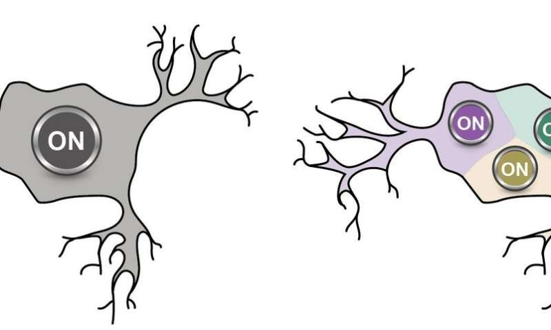 Physicists negate century-old assumption regarding neurons and brain activity