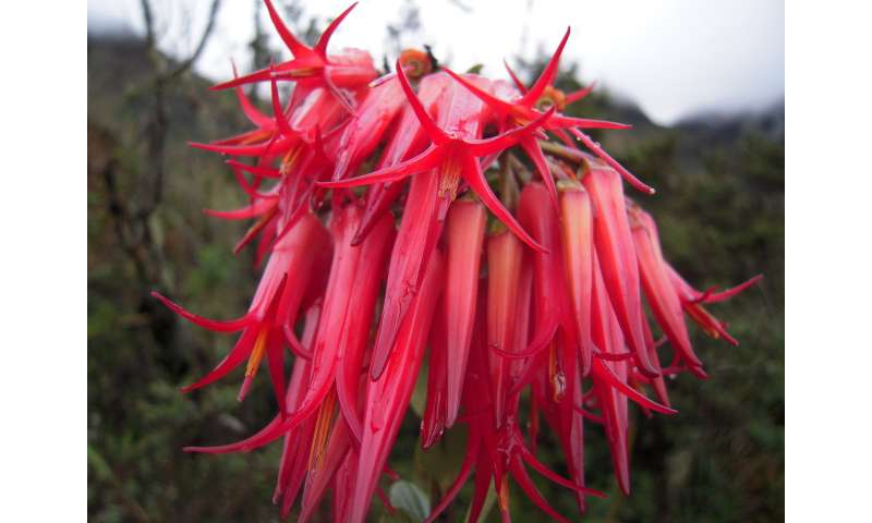 An integrated assessment of vascular plants species of the Americas