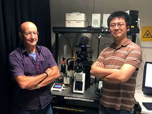 Super-resolution microscopy reveals lamin protein meshwork at the inner side of the nuclear membrane
