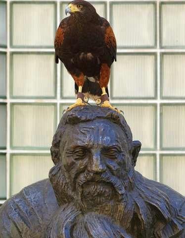 Trained hawks scare off smaller birds, draw stares in LA