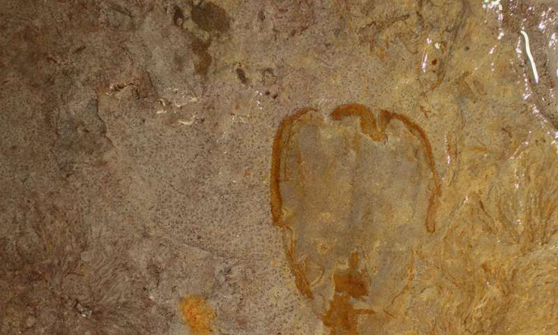 Scientists describe 'enigmatic' species that lived in Utah some 500 million years ago