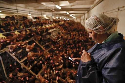 Fear spreads over tainted eggs despite low risk to consumers