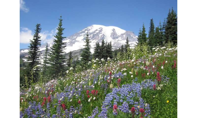How climate change may reshape subalpine wildflower communities