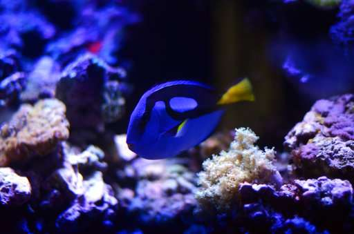 Keeping captive-bred fish has gotten easier