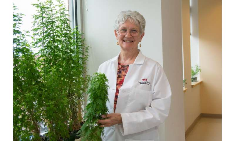 Patients with drug-resistant malaria cured by plant therapy developed at WPI