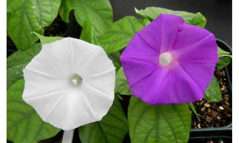 Scientists use CRISPR technology to change flower colour