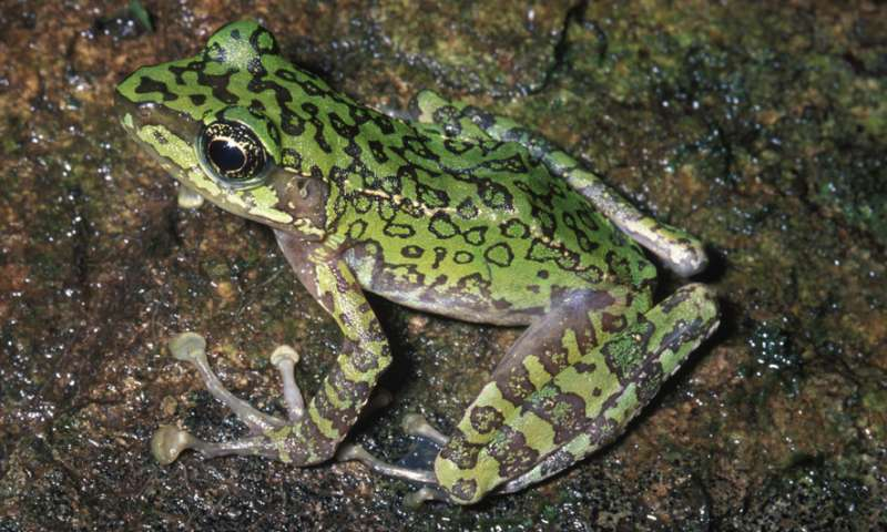 The evolution of 'true frogs' defies long-held expectations of science