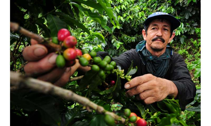 Climate change a buzzkill for coffee lovers