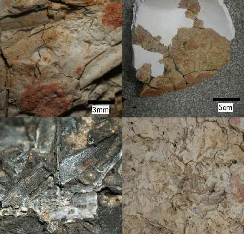 Radiocarbon dating of phytolith traces rice domestication to 10,000 years ago
