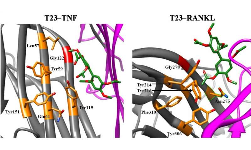 Scientists ID two molecules that inhibit proteins involved in chronic inflammatory disease