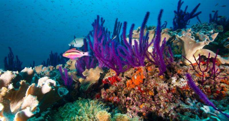Climate change lessons from Arabian Gulf coral reefs