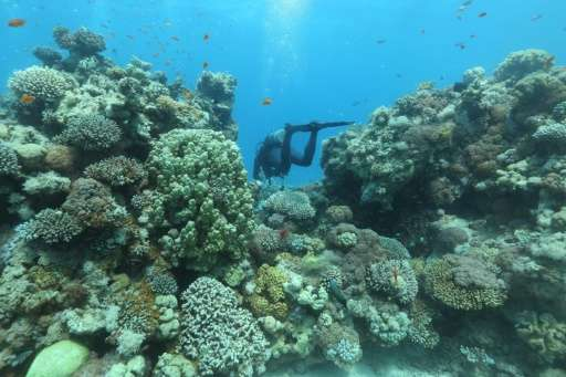 Researchers believe Gulf of Eilat corals fare well in heat thanks to their slow journey from the Indian Ocean through the Bab al