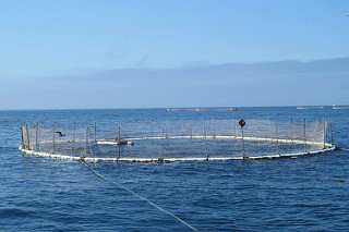 Climate change, population growth may lead to open ocean aquaculture