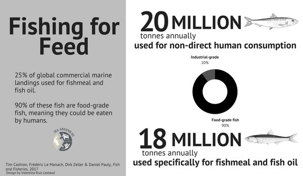 90 percent of fish used for fishmeal are prime fish