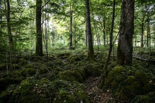 Researchers found seasonal changes in the carbon cycle across the Northern Hemisphere, concluding that s spring gets under way a