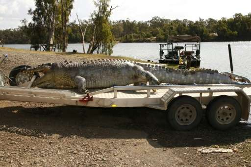 A 5.2-metre male crocodile was found in Queensland, Australia with a single gunshot wound to the head, sparking a hunt for the k