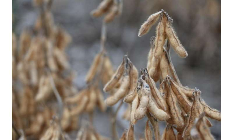 Adding commercial soy in developing countries brings unique challenges