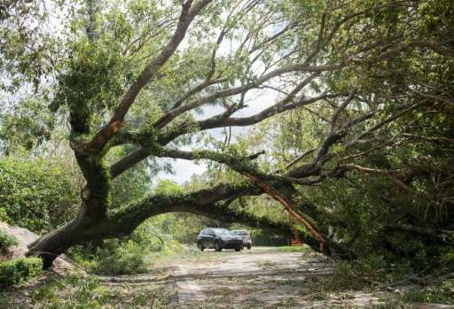 A downed tree blocks the roadway after falling from Hurricane Irma winds in Coconut Grove, Florida