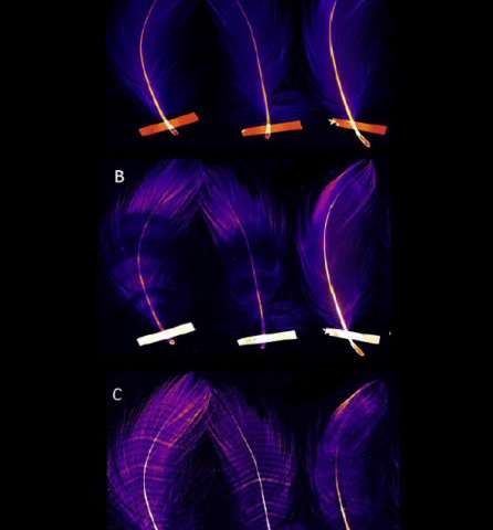 Advanced imaging reveals unusual, unseen patterns in seabird feathers