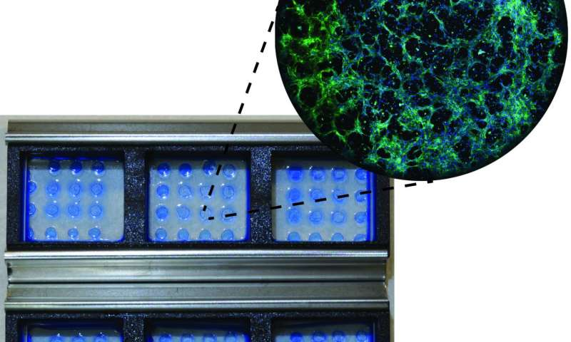 Advance furthers stem cells for use in drug discovery, cell therapy