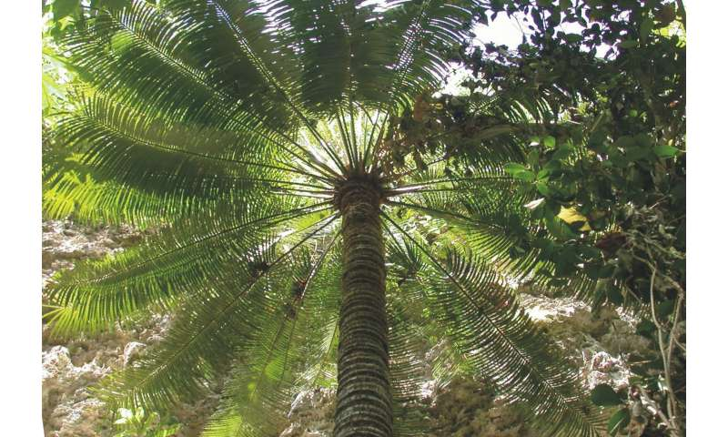 Adventitious root formation on cycads saves trees, but informs new conservation dilemmas