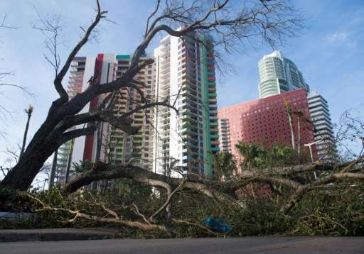 A fallen tree toppled by Hurricane Irma blocks a street in downtown Miami, Florida