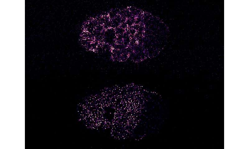 A force-driven mechanism for establishing cell polarity
