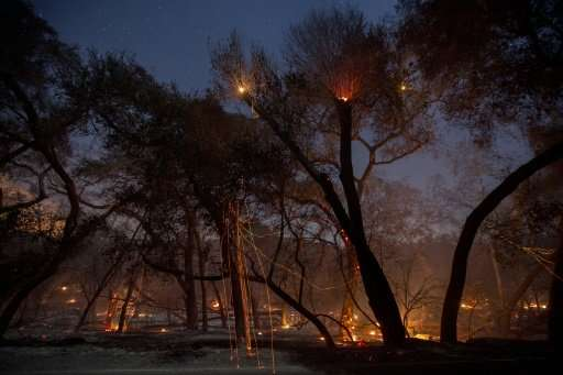 A freshly-burned forest is seen under the stars at the Lilac Fire in the early morning hours of December 8, 2017 near Bonsall, C