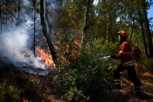 After an uncommonly dry winter and spring, almost 79 percent of the Portuguese mainland was enduring extreme or severe drought a