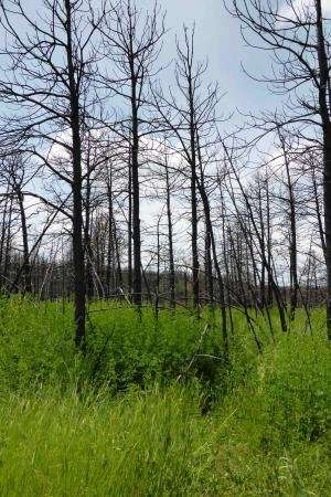 After a wildfire, attitudes about recovery vary with sense of place and beliefs about fire ecology