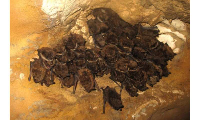 Alberta's largest-known bat hibernation site outside of Rocky Mountains discovered