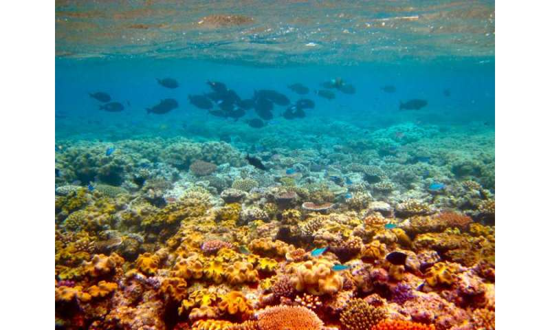 fortifies coral reefs in past and present