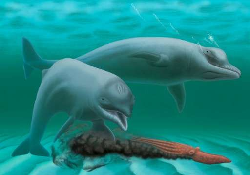 A life restoration of Inermorostrum xenops dolphins