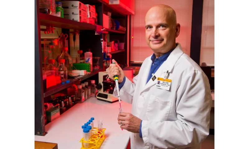 Ammonia's role in cardiovascular health tracked in mice, human cells
