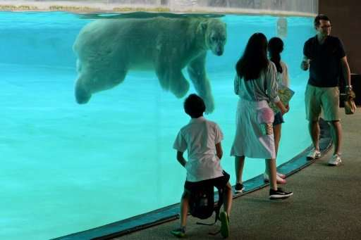 Among the elderly patients in Singapore Zoo's senior care programme is polar bear Inuka who, at 26, is a senior citizen by arcti