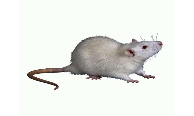 β-adrenergic receptor signaling affects tumor microenvironment