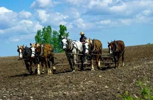 An Amish farmer uses a horse drawn harrow in a field on his farm near Wilson, Wisconsin