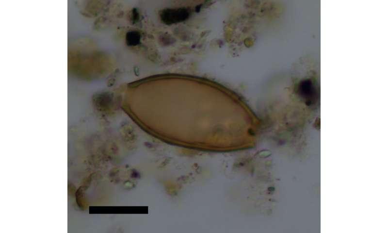 Ancient feces reveal parasites described in earliest Greek medical texts