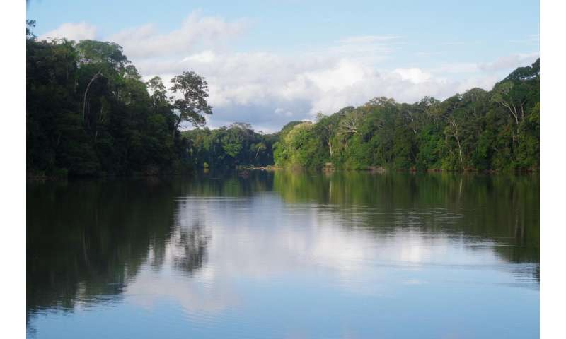 Ancient human disturbances may skewer our understanding of amazon basin