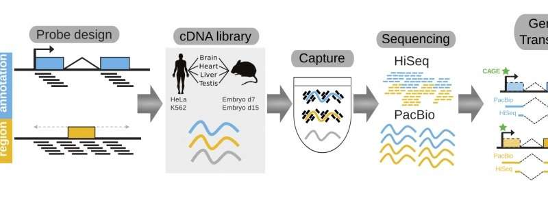 Dna Mapping Service on